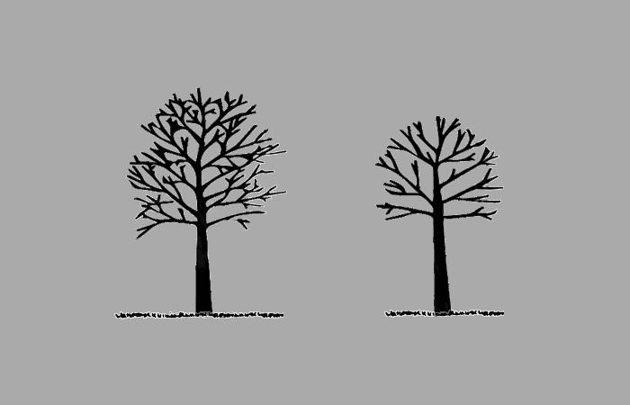 augļu koku kopšana, apgriešana, apgriešana, cena