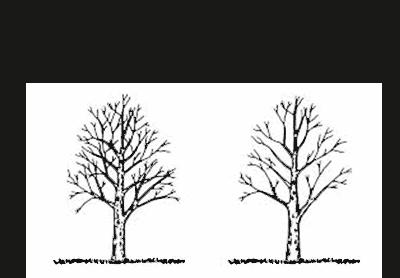 Vainaga retināšana, koka vainaga retināšana,