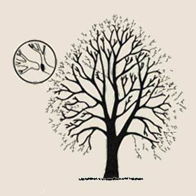 koka vainaga samazināšana, vainaga samazināšana,