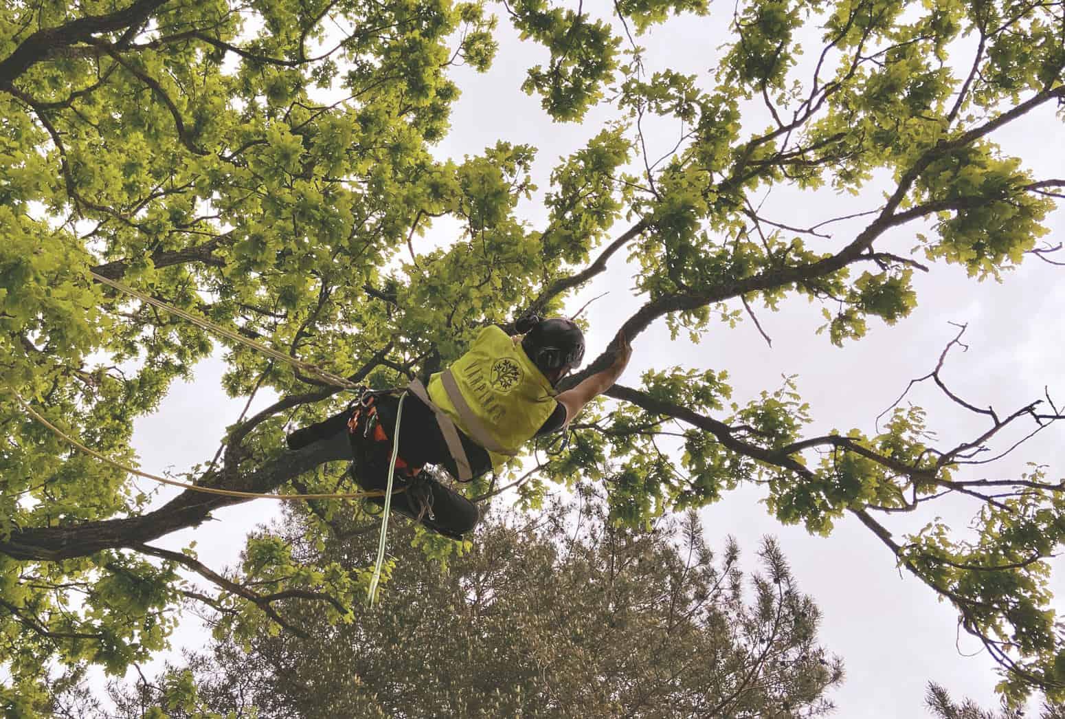 Arborists, kokkopis, arborista pakalpojumi,