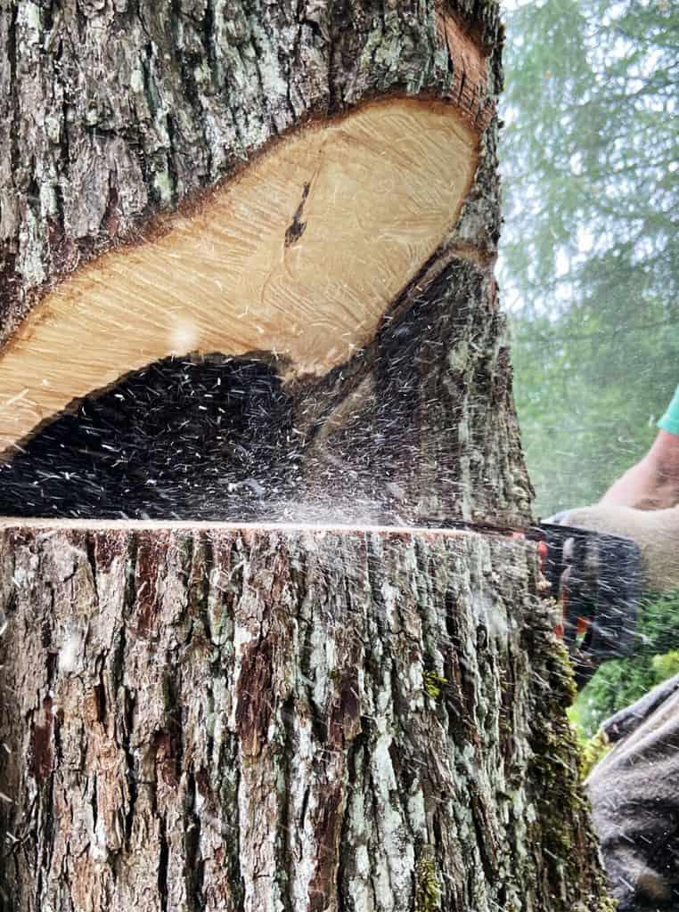 koku zāģēšana, koku nozāģēšana, lielu koku zāģēšana.
