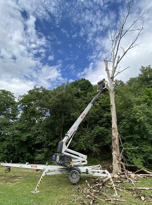 Koku ciršana, koku zāģēšana ar pacēlāja palīdzību